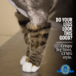 Why Hire A Certified Cat Groomer