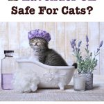 Essential oils – not safe for cats, good for dogs